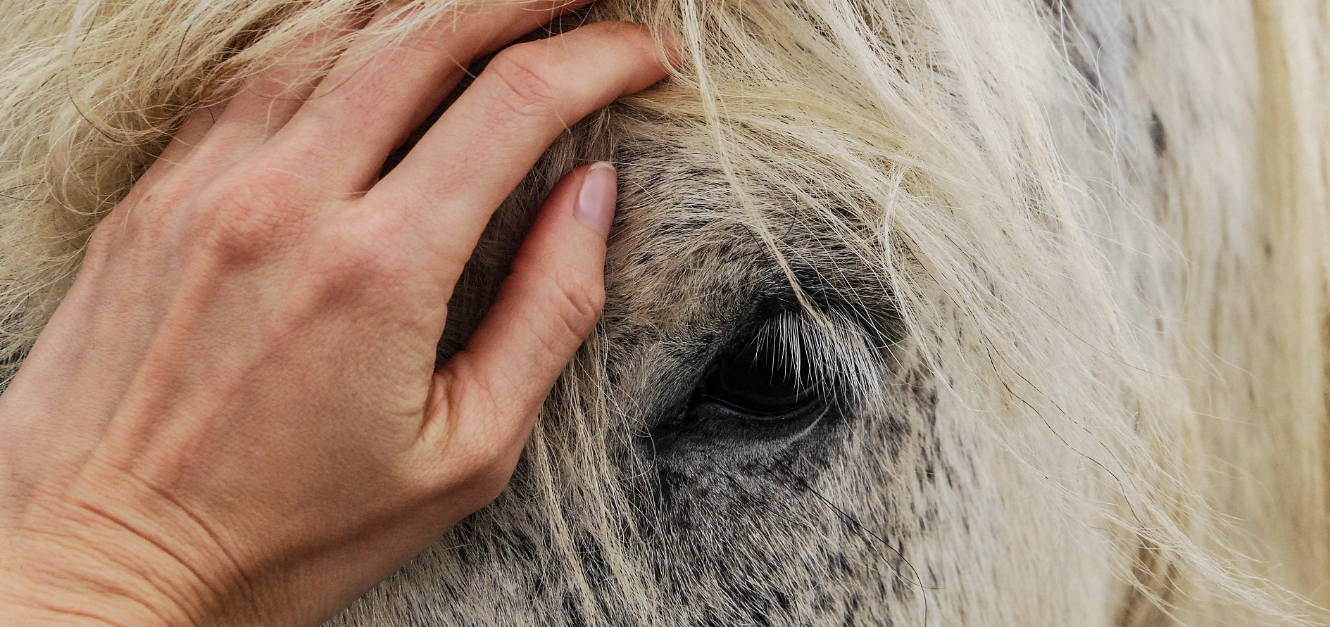 CLICK HERE TO SEE THE BENEFITS OF EQUINE THERAPY