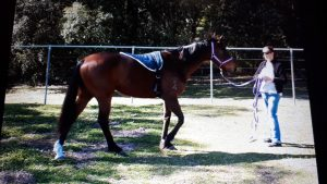 equine therapy training